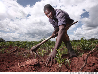 uganda_sorghum_farming